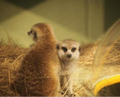 「サバンナと草原の動物園in倉敷天満屋」の会場風景をご紹介
