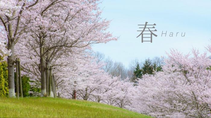 画面キャプチャ-1:園内には約1000本の桜。
