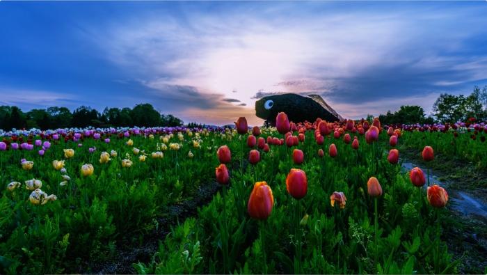 画面キャプチャ-4:園内の夕日